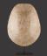 Albino Loggerhead Turtle Shell, 'Caretta Caretta'