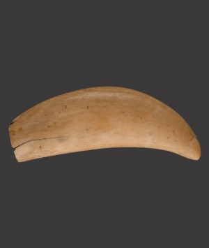 Whale Tooth 'Scrimshaw'