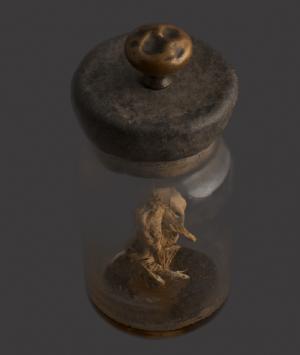 Preserved Polycephalic Duckling