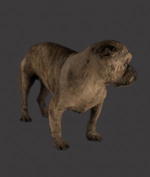 English Preserved Fighting Bulldog