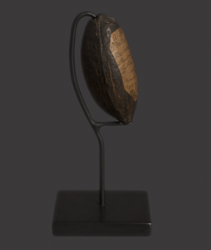 Miniature Guyana Coconut