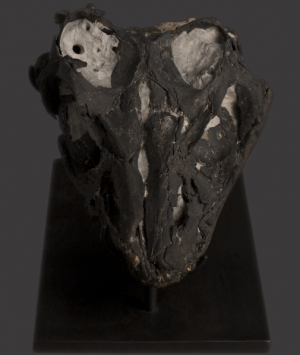 British Fossilised Marine Reptile Skull, 'Ichthyosaurus Communis'