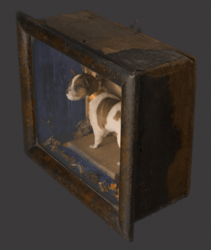 Preserved Miniature Dog