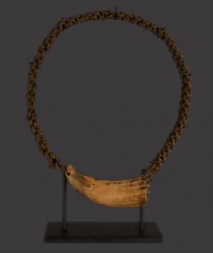 Fijian Ceremonial Whale Tooth, 'Tabua'